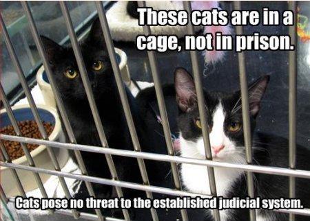 prisoncats