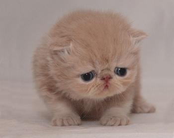 Sad cats are sad.